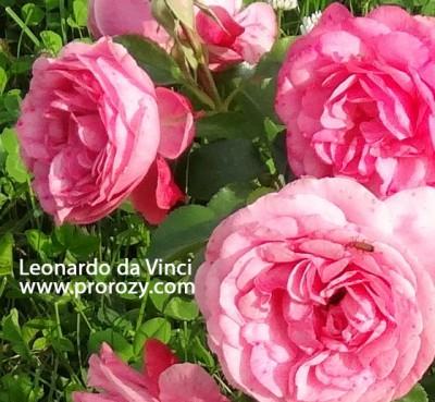 leonardo-2
