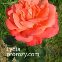 Lydia (Лидия)
