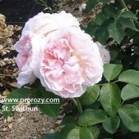 St. Swithun
