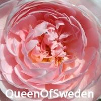 Сочетания роз по цвету