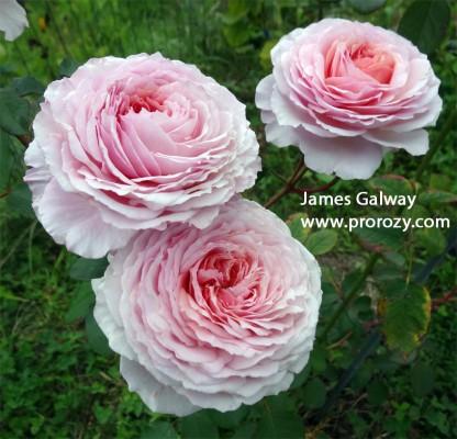 James-Galway