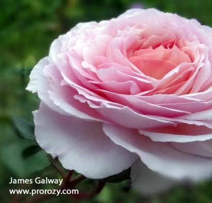 James-Galway3