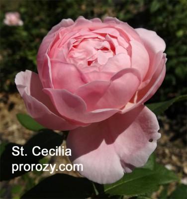 st-cecilia-1