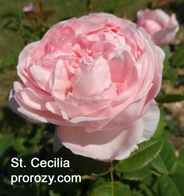 st-cecilia-2