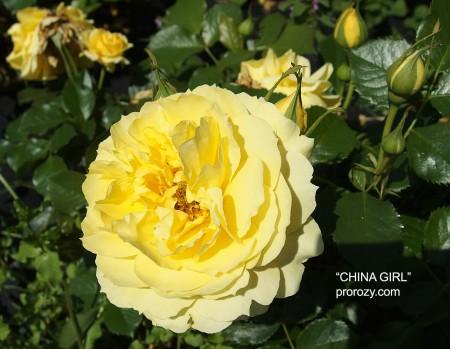 china-girl-1